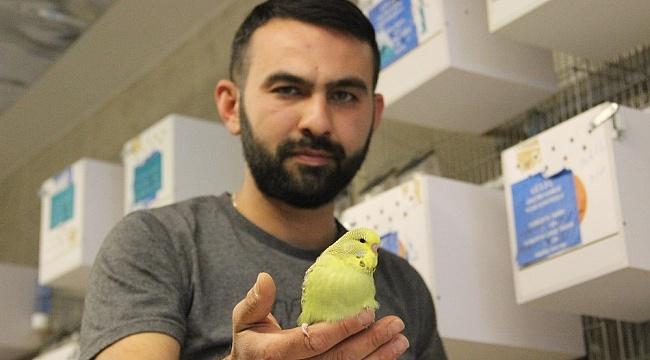 Karaman'da Türkiye'ye muhabbet kuşu üretiyor